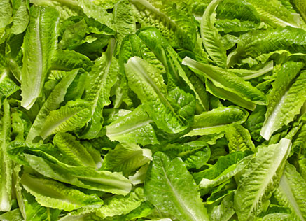 Cos Lettuce