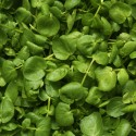 variety_watercress